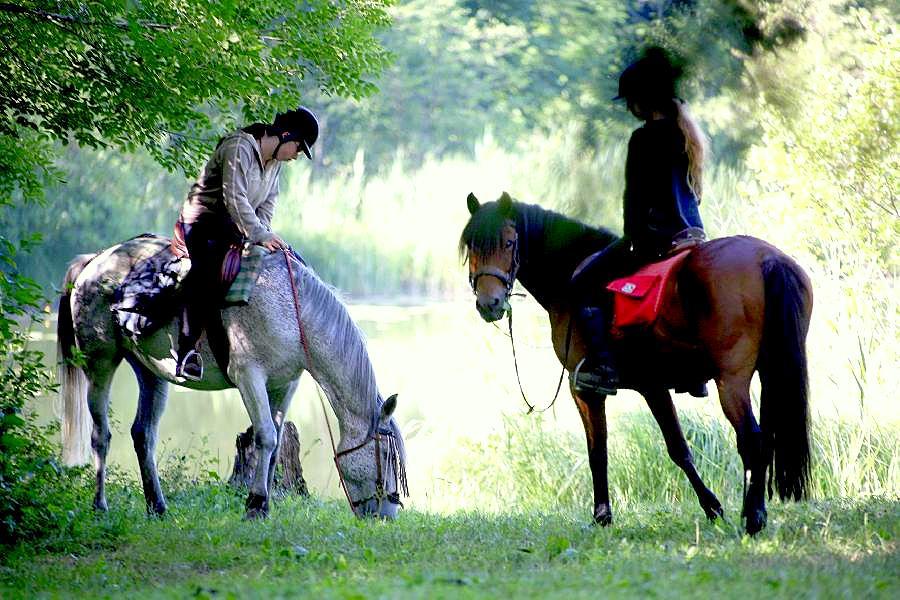 randonnee-cheval-ethologie-jura-1