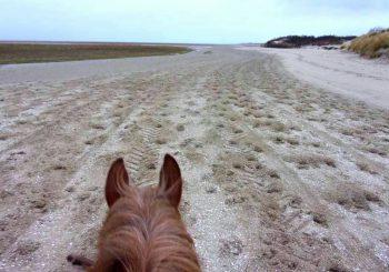 A cheval en Baie de Somme