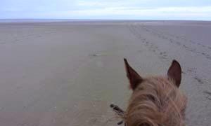rando baie de somme | destinations cheval