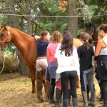 reglementation destinations cheval