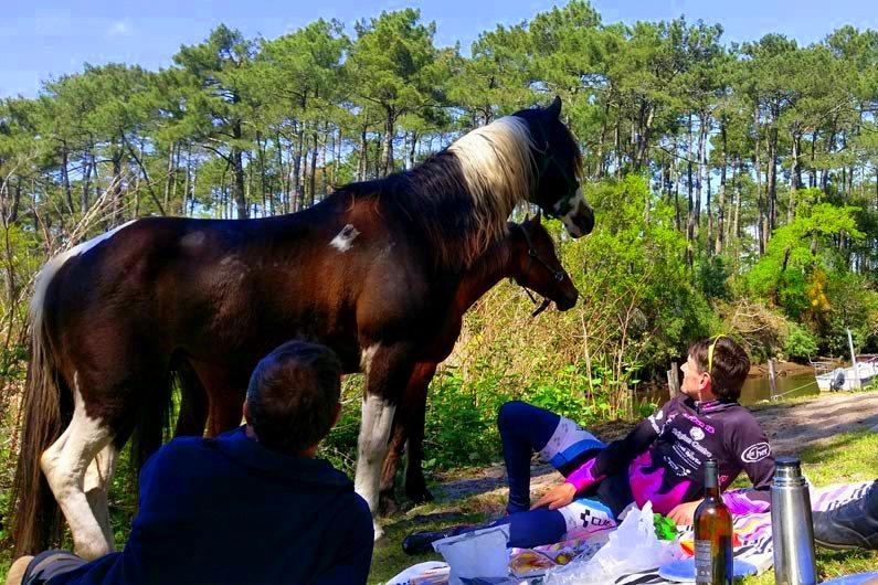pique nique cheval